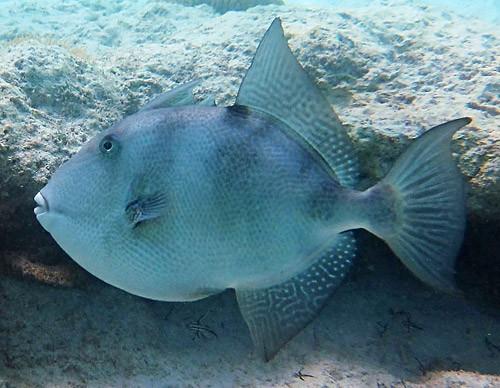PCB Fishing Size Limits