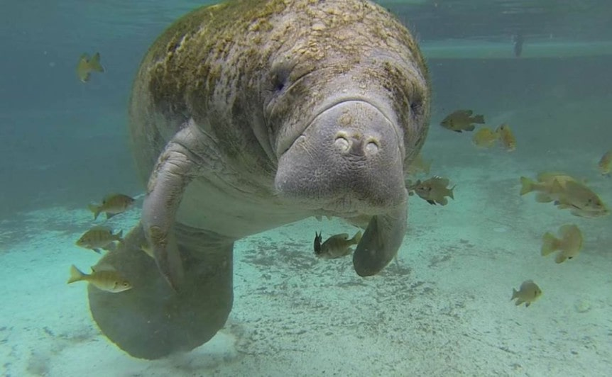 Panama City Beach Wildlife
